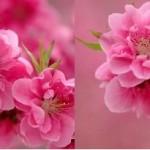 راهکارهایی برای حفظ شادابی و نشاط در فصل بهار/سلامت