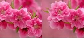 بهار2