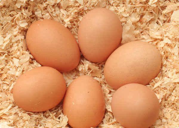 تـخم مـرغ همیار لاغری!گیاهان دارویی