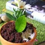 آموزش وطرز تهیه گلدان خوراکی/آشپزی