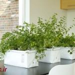 گیاهان تان را برای فصل سرما آماده کنید !نکات خانه داری