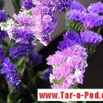 آموزش گل باجوراب/هنر های خانه