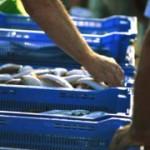 توصیه هایی برای خرید ماهی شب عید/سلامت