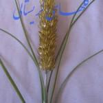 آموزش ساقه گل گندم/کریستال بافی
