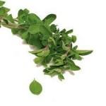 آشنایی با4نوع آنتی بیوتیک طبیعی/گیاهان دارویی