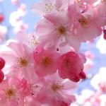 2۰ پیمان تغذیهای در آغاز بهار/سلامت